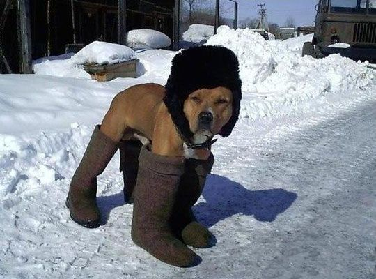 cold-dog.jpg.409873b24feb863108e51b34a4b4b4d1.jpg